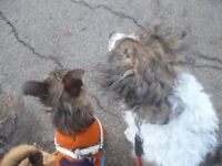 Town Centre Dog walker ,& pet sitting ,many year experience in rescue