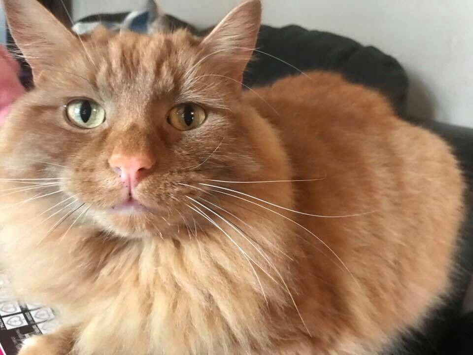 Missing Cat Winchburgh
