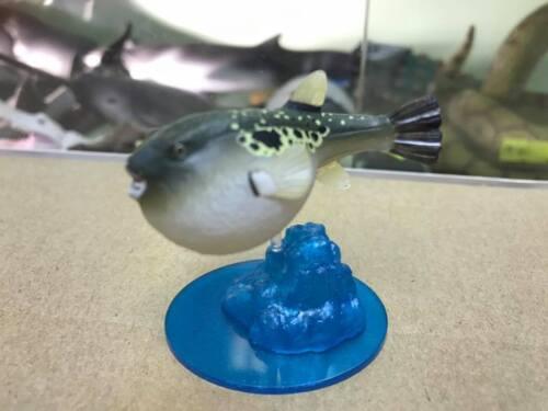 Kaiyodo Akikyokan Aquarium exclusive Tiger puffer fish mini Figurine Figure SP
