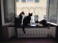 Dog sitter/walker, cat sitter.