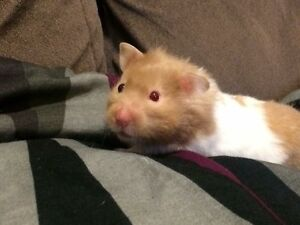 Hamster to a good home