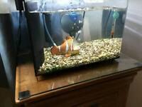 19 ltr Nano Aquarium