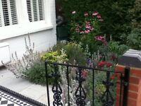 Garden Maintenance & planting - Islington
