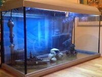 "Large Glass Fish Tank/Aquarium 80cmWx41cmHx30cmD / 31""Wx16""Hx11.75""D with light"
