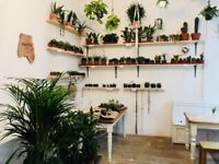 Indoor Plants For Sale (Classic and Exotic Species)