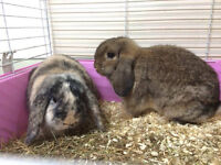 *Two female rabbits looking for a good home *