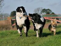 Professional Dog Walking and Dog Day Care Services in Edinburgh