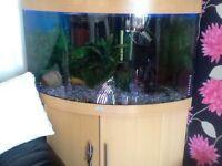 Juwel trigon 190 l aquarium