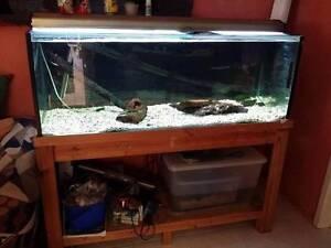 Fish tank setup Bundall Gold Coast City Preview