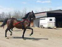 Horse boarding and training 5 mins from Beaumont
