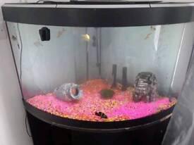150L Fluval Corner Fish Tank