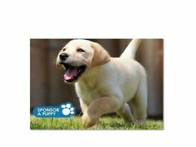 Guide Dogs For The Blind- D2D Fundraiser- Leeds - £7.50-£8.50 Per Hour - OTE £22k - £30k