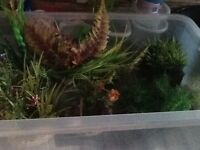 Aquarium /fish tank plastic plants .Approximately ten plants for sale. All artificial. all pre-used