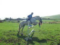 *HORSE FOR LOAN* 17hh Reg ID gelding