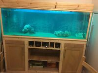 6ft fish tank for sale