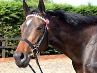 Genuine mare for share - rugby