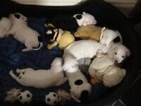 Staffie puppies for sale 3 boys 3 girls will be ready in 2/3 weeks