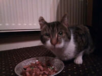 Cat found 27th Feb - Broadlea Grove, Bramley, Leeds