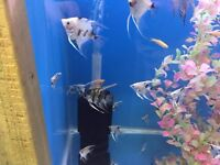 Tropical fish Job Lot to clear