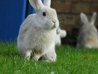 Beautiful tamed loving baby rabbits. 3 males 3 females. 5* homes only. 1 female sold.