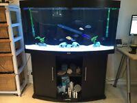 Fish tank aquarium Juwel Vision 260 litre
