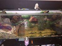 4ft fish/turtles tank