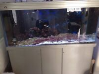 6ft Fish Tank with Marine Equipment, stand, rock and sand.