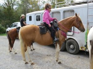 14 year old TWH Palomino papered 15.3 hh