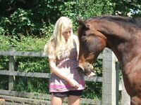 Experienced and knowledgeable 30-year-old female horse owner seeks opportunity to ride.