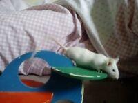 6 male mice for sale. URGENT