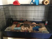 Hamster/Rat cage