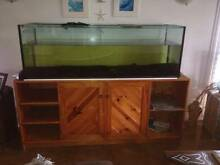 6 foot fish tank complete set-up Maroochydore Maroochydore Area Preview