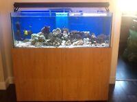 300l Marine fish tank £500