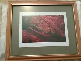 Autumnal framed picture