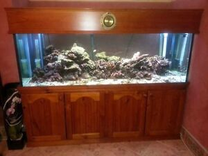 Saltwater fish tanks for sale fish gumtree australia for Saltwater fish tank for sale