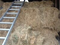 Hay bales for sale - 50 due to re-homing alpacas.