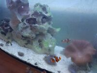 Marine Fish and plants for sale