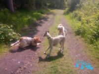 Experienced and qualified Dog Walker. Canine First Aid trained, insured and DBS checked.