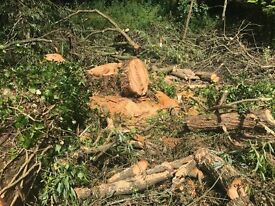 LARGE AMOUNT OF TIMBER (WILLOW) FREE TO COLLECTOR NEED CUTTING UP TO REMOVE NEEDS TO BE CUT UP