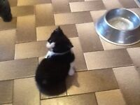 ***FOR SALE*** VERY CUTE & ADORABLE KITTENS. READY NOW!!