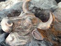WALL ART. Fake Bulls head. colour, black distressed look. Price £30