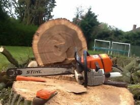 Climbing arborists and groundsman supplied