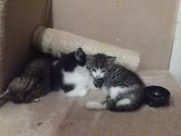 LOVELY KITTENS LOOKING FOR A NEW HOME