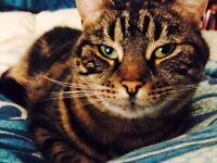 HELP - LOST CAT