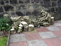 Holly tree logs