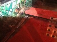 Terrapin tank and accessories