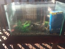 Fish Tank L-60cm W-30cm H-37cm  No lid but comes with filter, roc Palmer Mid Murray Preview