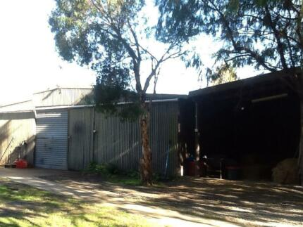 Horse Agistment - Tyabb ($45pw diy) half acre private paddock