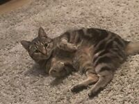 Missing cat (Tabby, 9 y/o), Grangetown