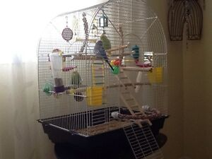 3 buggies with cage